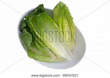 Washed Fresh Romaine Lettuce On White Bowl