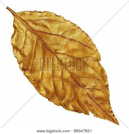 Yellow golden dry leaf, vintage element