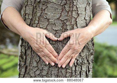 Heart shape on tree