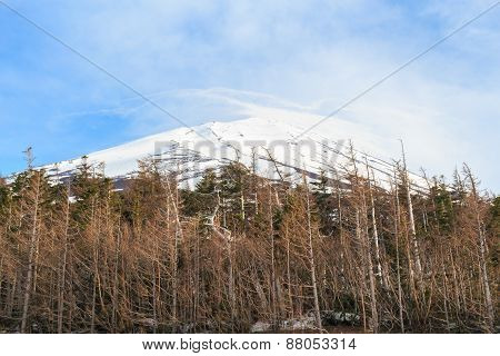 The Top Of Fujiyama And Dry Tree In Japan