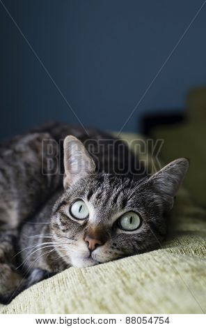 Cat Liying On The Top Of A Couch