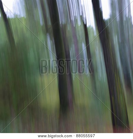 Tree Trunks Abstract Blur
