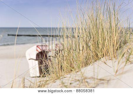 Dune Grass On Baltic Sea Beach