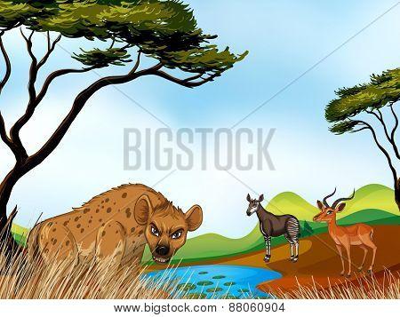 Animals standing around the field
