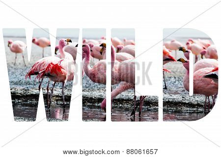 Word Wild Over Pink Flamingo.