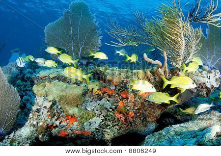 Coral Reef Composition with fish aggregation.