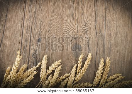 Wheat spikes