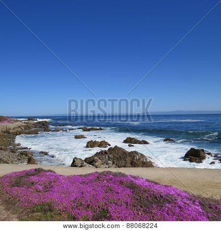Pacific Grove Coast