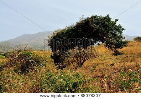 Tree Against Mountain Landscape