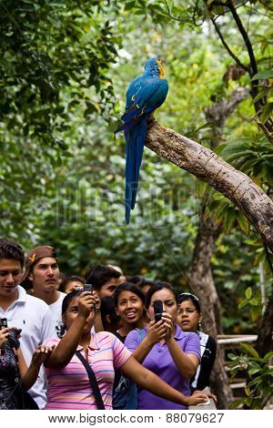 Macaw in Parque Historico, cultural and educational park, Guayaquil