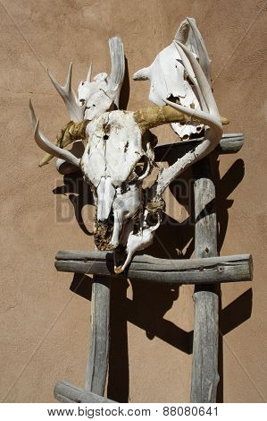 Cow-skull decoration outside adobe-style building in Truchas, New Mexico