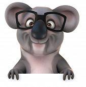 pic of koalas  - Fun koala - JPG