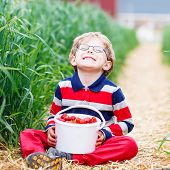 stock photo of strawberry blonde  - Little kid boy in glasses laughing and picking and red ripe strawberries on organic pick a berry farm in summer on warm day - JPG