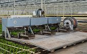 foto of chrysanthemum  - Transplanter for chrysanthemum cuttings is ready for the start of work in a specialized chrysanthemum nursery in a greenhouse - JPG