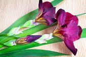 foto of purple iris  - On the surface of the table are two large beautiful iris flower with a beautiful purple color with green leaves - JPG