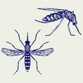 picture of gnats  - Mosquito - JPG