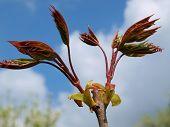 image of bohemia  - Spring budding trees southern Bohemia Czech Republic - JPG