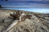 picture of uniqueness  - Unique textured driftwood on the beach early morning in Jervis BaY set against azure waters and blue skies - JPG