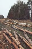 picture of deforestation  - Environment nature and deforestation forest concept  - JPG