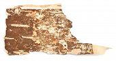 image of white bark  - birch bark isolated on a white background - JPG
