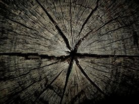 stock photo of disafforestation  - Stump is cut into very long - JPG
