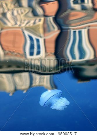 White jellyfish in the sea water
