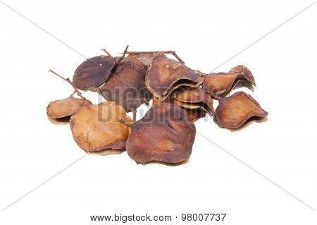 Jacaranda Fruit Or Seed Pods