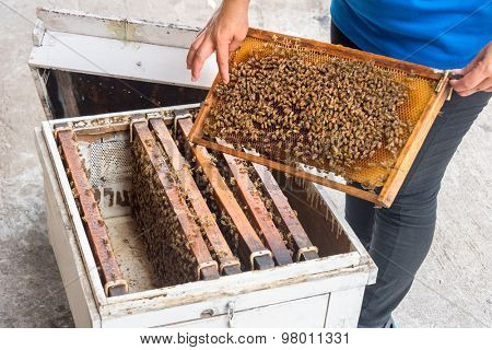 woman showing bees in the hive and Honeycomb at Rayong Thailand