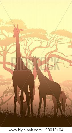 Vertical Illustration Of Wild Giraffes In African Sunset Savanna.