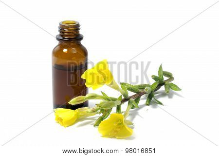 Evening Primrose Oil, Flowers And A Bottle, Isolated On White