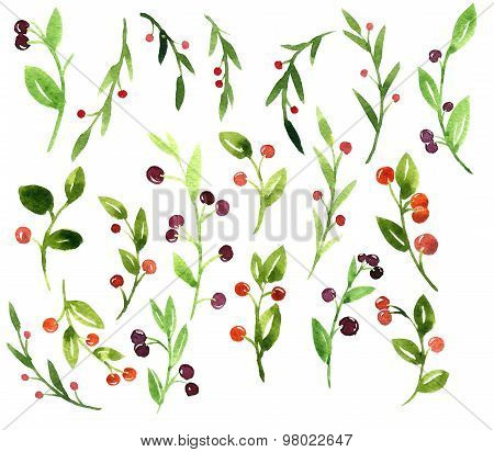 vector watercolor green branches with berries