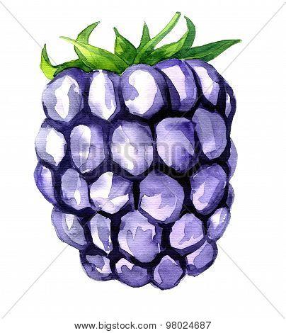 watercolor drawing blackberry