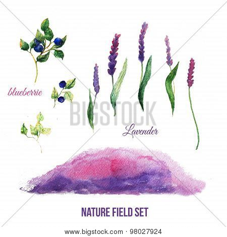 Lavender field illustration set with blueberries and watercolor hand drawn background.
