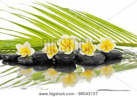 Set of palm with wet zen stones and Frangipani