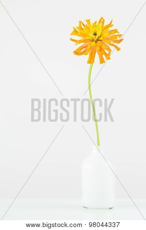 Tall Orange Flower In Small Vase.