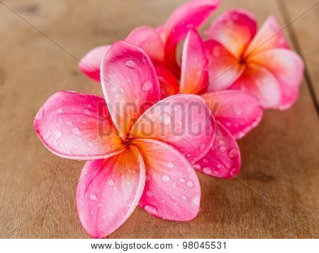 Pink Plumeria On Wooden Floor