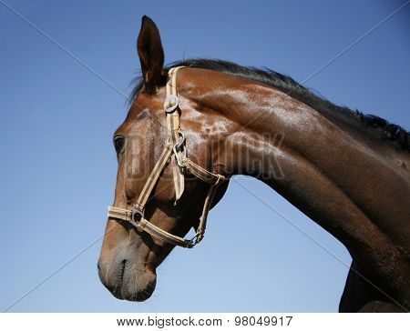 Side View Portrait Of A Beautiful Horse