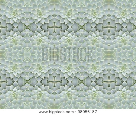 Succulent Plant Seamless Pattern Background