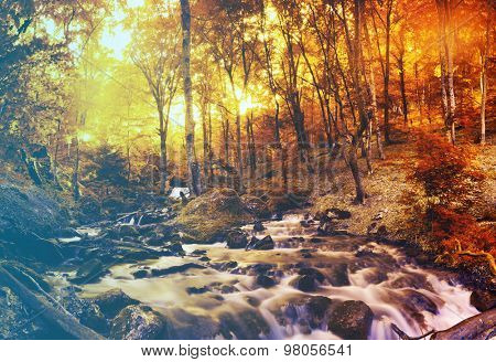 Autumn creek woods with yellow trees foliage and rocks in forest mountain.Filtered image: vintage effect.