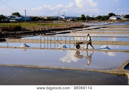 Salt workers  work in salt field