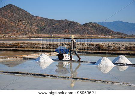 Salk workers work in salt field