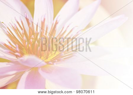 beautiful lotus flower background, Symbol of nature