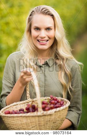 Portrait of a blonde winegrower holding a red grape basket