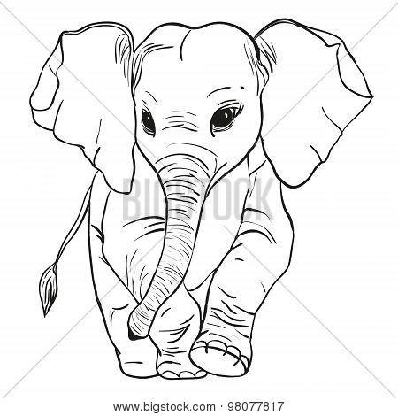 elephant goes