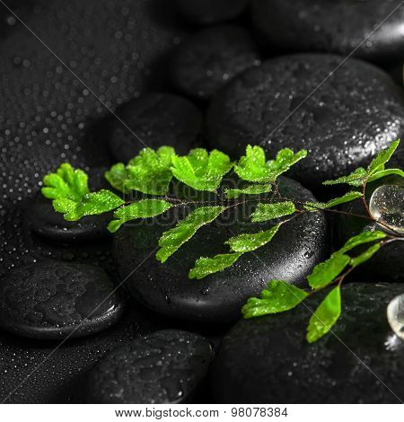 Beautiful Spa Concept Of Green Twig Fern, Ice On Zen Basalt Stones With Dew, Closeup