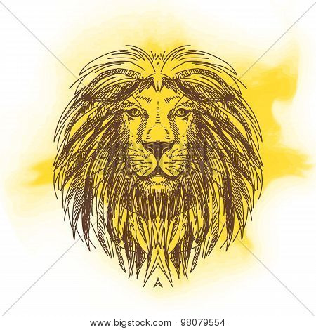 Vector hand drawn illustration with lion head. Wild Animal.