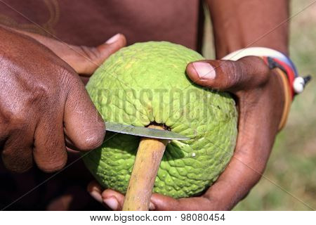 Man Opening A Breadfruit
