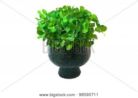 Young Seedlings Are Growing In A Clay Pot Isolated