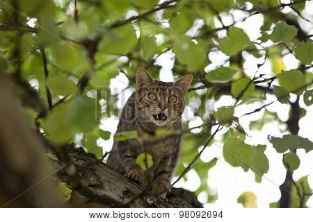 cat climb high up in tree