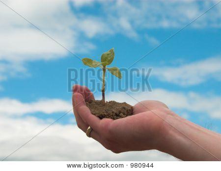 Hand+Plant